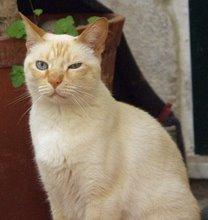 Jasmim - o meu gato