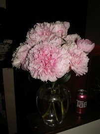Peonies with Tab