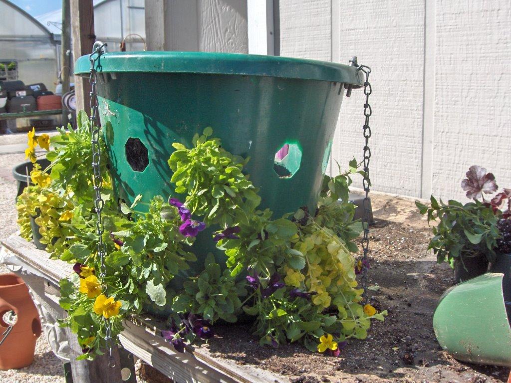 Wilmington North Carolina Flower Gardening U0026 Horticulture News Container Gardening
