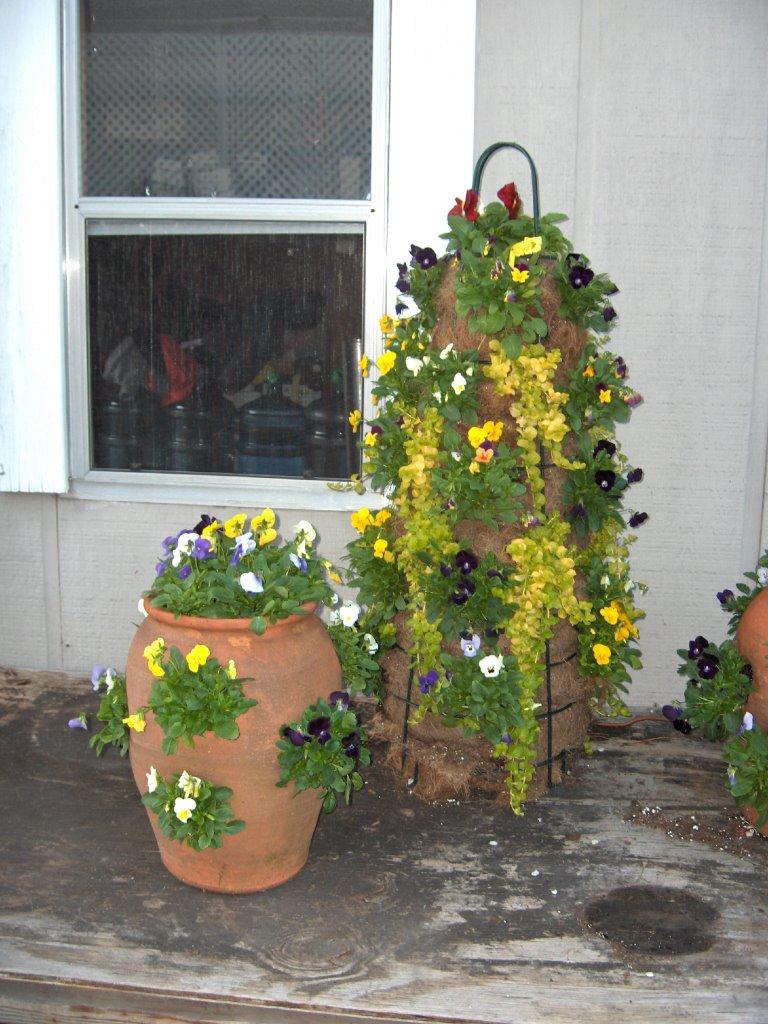 Wilmington North Carolina Flower Gardening U0026 Horticulture News November 2006