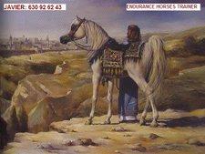 ENDURANCE HORSES TRAINING  (entrenamiento de caballos para pruebas de endurance zona osona tardes)