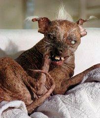 Il Cane Malato..