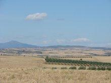 Olivové sady.
