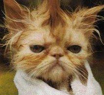 Deja un comentario o el temible Gato Punk descargará su ira contra ti!!!