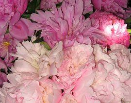 Pike Market Peonies