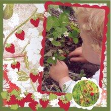 Plukke jordbær