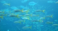 Fish in Deep Water
