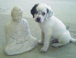 Gaspar y el Buda
