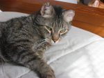 The Kitty Corner