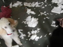Paper Towel Chaos