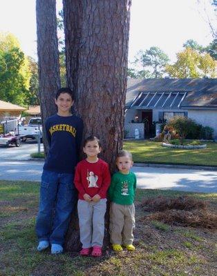 Tree Nov 18, 2006