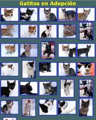 Algunos de nuestros gatitos en adopción