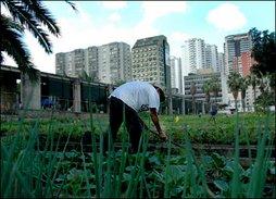 Urban food gardening