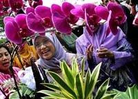 Flowers, Plants ...