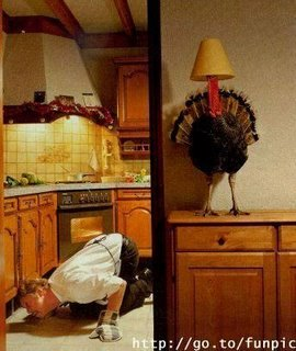 Here turkey, turkey, turkey...