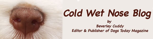 coldwetnose