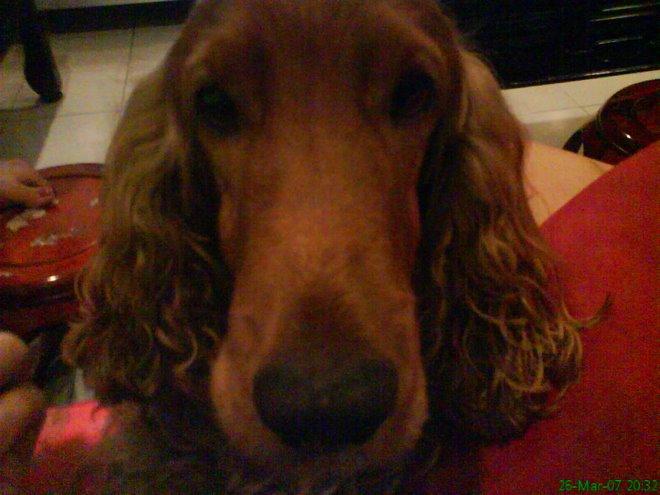 my lovely doggie tubbie!!