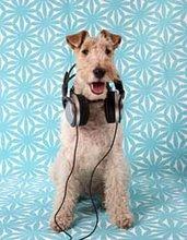 blogdog!