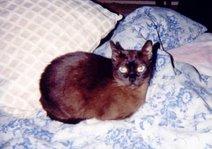 Cheyenne: 1992-2000