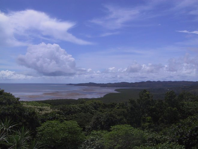 Babeldaob Upland Forest and Mangrove