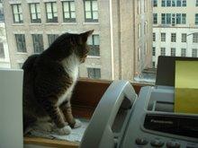 gallery cat of maria torres at broadway 473 ny arts magazine