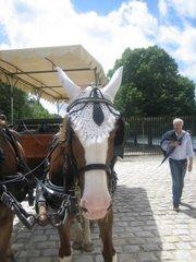 Il n'est pas beau le cheval !! avec ses oreilles en dentelle