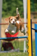 Jump&#39;n&#39;Bark