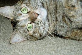 MrsB's Fat Cat Fergie: