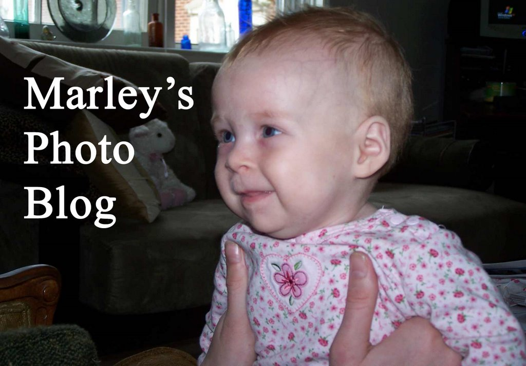 Marley's Photo Blog