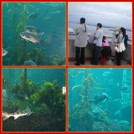 My family at the aquarium