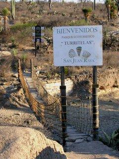 San Juan Raya turritelas ©