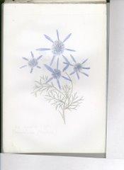 fiore (basovizza - trieste)