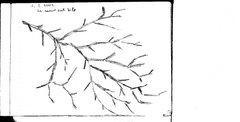 ramo sul sile (treviso)