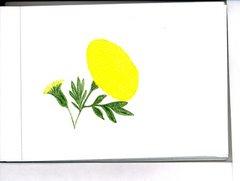 fiore giallo (montecarlo)