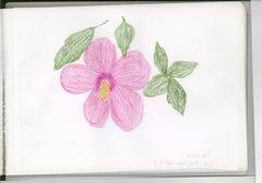 fiore (treviso)