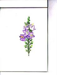 il sentiero di rilke (duino - trieste). fiore