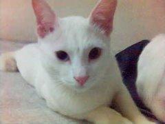 Luvly Cat: Tashi