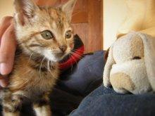 avia gatos salbjes