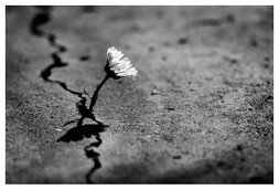 ¨*Flower¨*