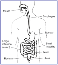 Digestive Support and Information