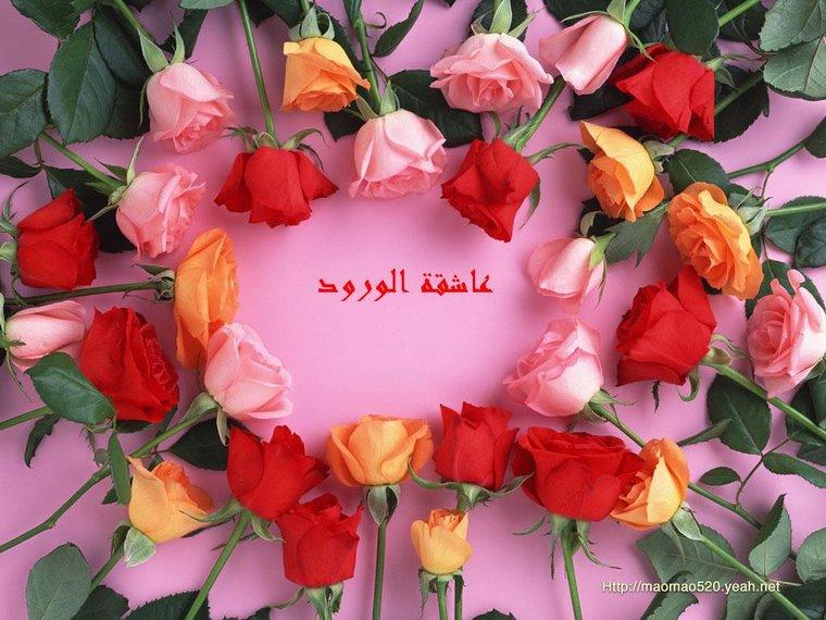 عاشقة الورود