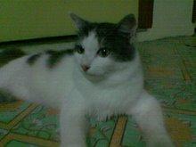 :: Abush... Kucing Jiranku ::