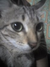 :: Si Kenek.. Kucingku Yang Comel & Manje ::