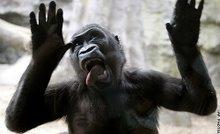 Monkey!!