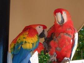 Miami Birds