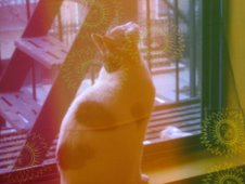 Basil's cat