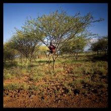 Brousse Kenya