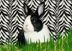 HipHop Super Bunny