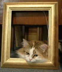 Art Critic - Bunch the cat