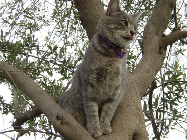 CATS RRRULE! TTHHHBBBPP!!!